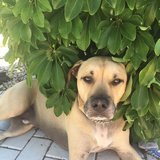 Photo for House/Dog Sitter Needed For 1 Dog In North Fort Myers