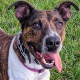 Photo for Long Term Sitting, Boarding, Walking Friend For Dog In Longmont