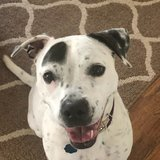 Photo for Looking For A Pet Sitter For 2 Dogs In Marietta