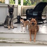 Photo for Our 4 Sweet Dogs Are Looking For A Regular Dog-walker