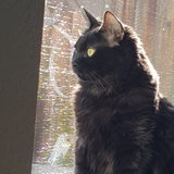 Photo for Looking For A Pet Sitter For 1 Cat In Rancho Cucamonga