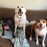 Photo for Sitter Needed For 3 Dogs In Huntington Beach