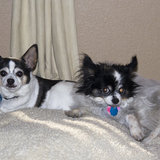 Photo for Sitter Needed For 2 Dogs In Lakewood