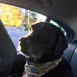 Photo for Walker Needed For 1 Dog In North Reading