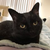 Photo for Sitter Needed For 1 Cat In Rockville