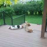 Photo for Looking For A Pet Sitter For 2 Dogs In Omaha