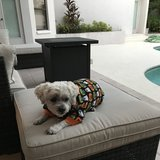 Photo for Looking For A Pet Sitter For 2 Dogs In Oldsmar