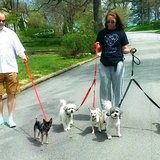 Photo for Sitter Needed For 5 Small Dogs In Des Moines Vet Tech/assistant A Plus! Shelter Experience A Plus!