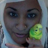 Shafia N.'s Photo