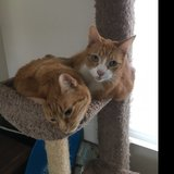 Photo for Looking For A Pet Sitter For 2 Cats In Kent