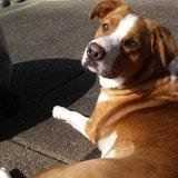 Photo for Patient, Energetic Dog Walker
