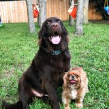 Photo for Looking For A Pet Sitter For 2 Dogs In Spring Hill