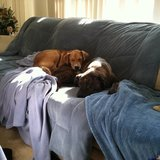 Photo for In Home Dog Sitting Oceanside