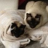 Photo for Sitter Needed For 2 Cats In Venice