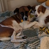 Photo for Looking For A Pet Sitter For 2 Dogs, 1 Cat In Hopkins
