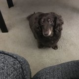 Photo for Looking For A Pet Sitter For 1 Dog In Fort Wayne