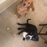Photo for Sitter Needed For 2 Dogs In Odenton