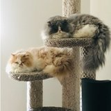 Photo for Cat Sitting November 14 -17