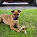 Photo for Sitter Needed For 1 Dog In Burnsville
