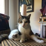 Photo for Sitter Needed For 1 Cat In San Mateo