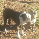 Photo for Boarding Needed For 2 Dogs