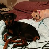 Photo for Walker Needed For 2 Dogs In Palm Bay