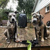 Photo for Sitter Needed For 2 Dogs In Charlotte