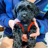 Photo for Trainer Needed For 1 Puppy