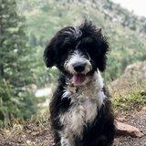 Photo for Dog Walker In Aspen Needed - 4/11 Only