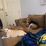 Photo for Looking For A Pet Sitter For 2 Dogs In Virginia Beach