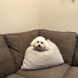 Photo for Looking For A Pet Sitter For 1 Dog In Dover