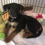 Photo for Puppy Sitter  Needed For 1 Dog In Lafayette
