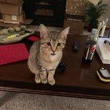 Photo for Cat Groomer