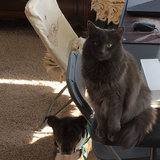 Photo for Sitter Needed For One Cat In Wheaton
