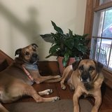 Photo for Sitter Needed For 2 Dogs In Mechanicsville