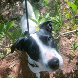 Photo for Looking For A Pet Sitter For 1 Dog In Asheville