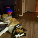 Photo for Looking For A Pet Sitter For 2 Dogs In Dacono