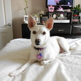 Photo for Sitter Needed For 1 Dog, 4 Cats In Monroe