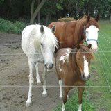 Photo for Looking For A Sitter For 4 Horses, 1 Farm Animal, 3 Cats, 4 Dogs