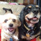 Photo for Sleep In Dog Sitter, Walker Sitter
