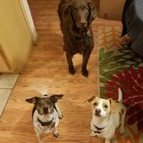 Photo for Looking For A Pet Sitter For 3 Dogs In Westminster