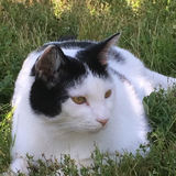 Photo for Sitter Needed For 1 Cat, 1 Dog In Kennesaw GA
