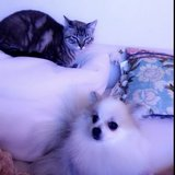 Photo for Pomeranian And Cat Sitter