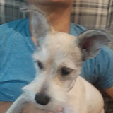 Photo for Looking For A Pet Sitter For 1 Dog In Palm Coast