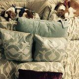 Photo for Dog Sitter For 2 Senior Dogs.