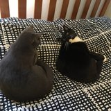 Photo for Sitter Needed For 2 Cats In El Segundo