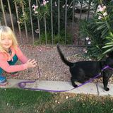 Photo for Sitter Needed For 1 Dog, 3 Cats In North Phoenix (8/16-8/18; 8/30-9/2)