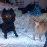 Photo for Diabetic Dog Sitter