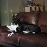 Photo for Looking For A Pet Sitter For 1 Dog In Kissimmee