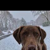 Photo for Walker Needed For 1 Dog In Cohasset
